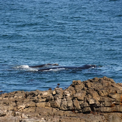 the-wine-specialists-whale-watching-tour2