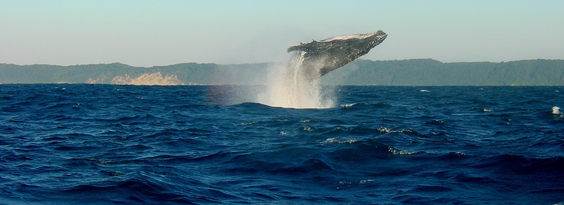 the-wine-specialists-whale-watching-tour3